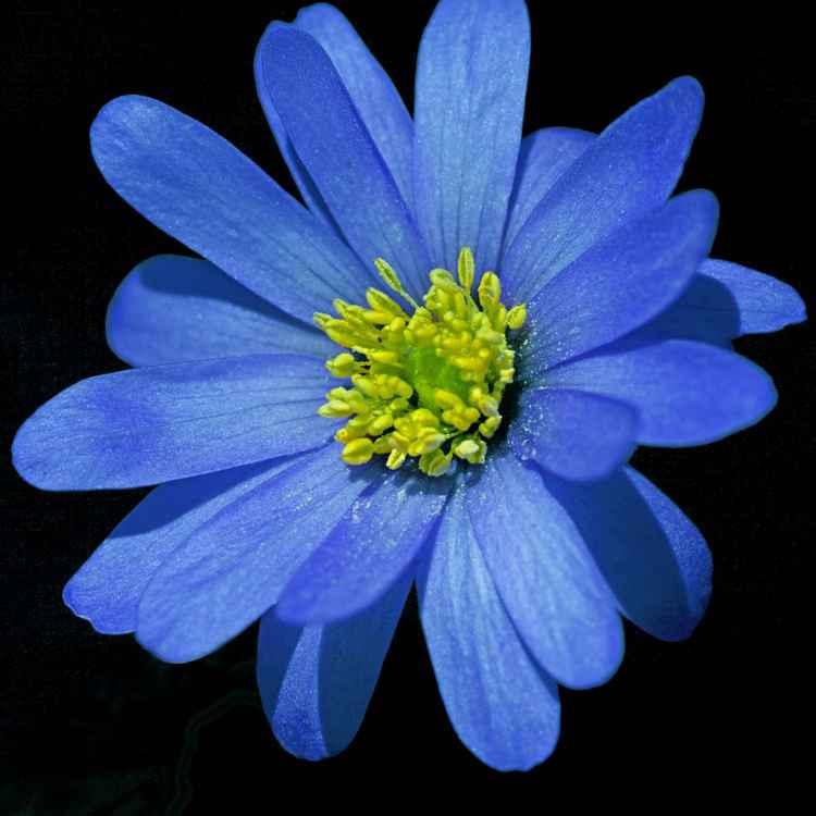 Botanical 38 -