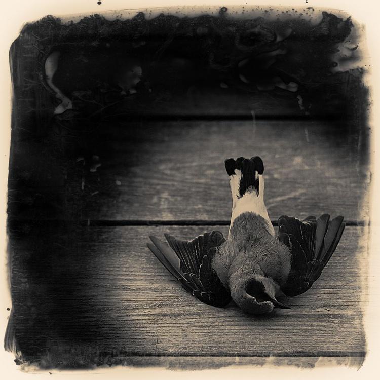 Dead bird - Image 0
