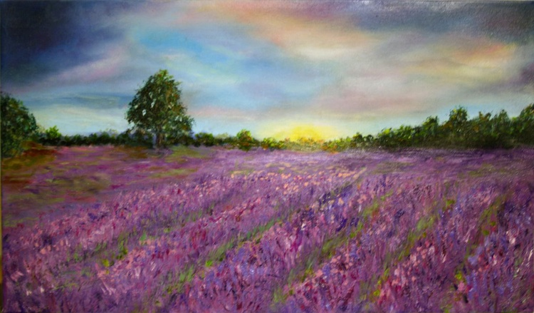 field of lavender - Image 0