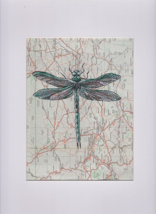 Dragonfly Migration 8 (Size 2) - Image 0