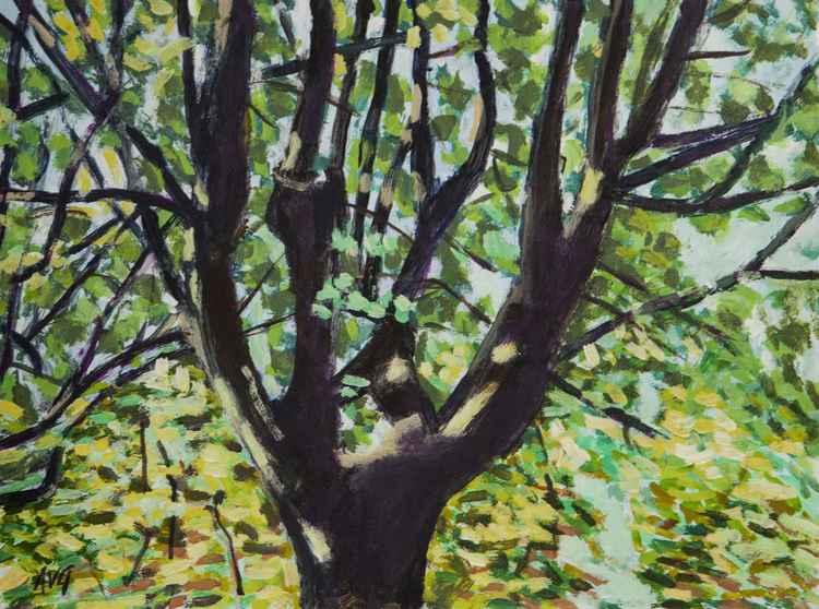 Tree Antlers -