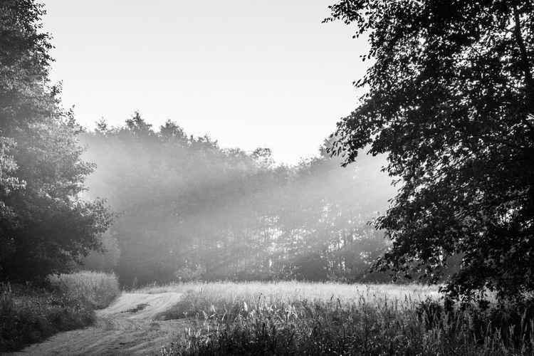 Landscape14 -