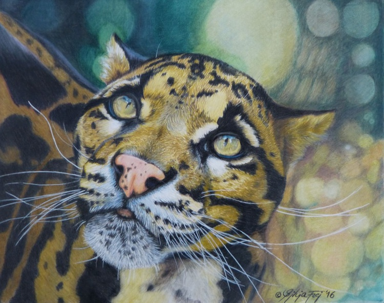 Clouded Leopard - Image 0