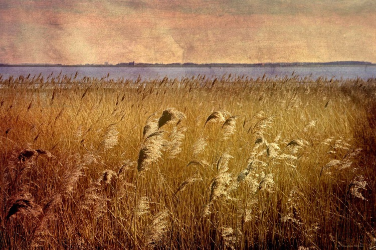 Summer Wind - Canvas 75 x 50 cm - Image 0