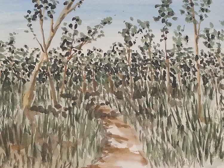 the Australian bush -