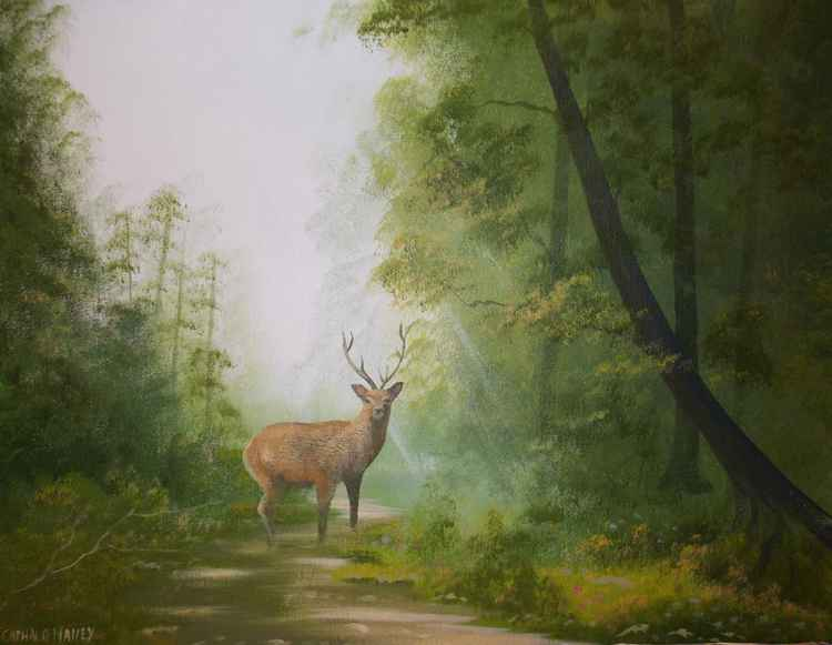 forest stag -