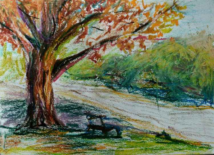 Tree by the road -