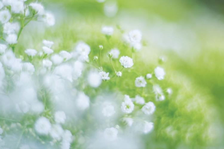 White Tenderness VIII - Image 0