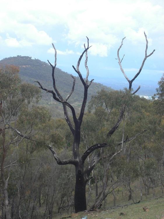 Lightning tree - Image 0