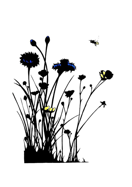Cornflowers and Buttercups - Image 0