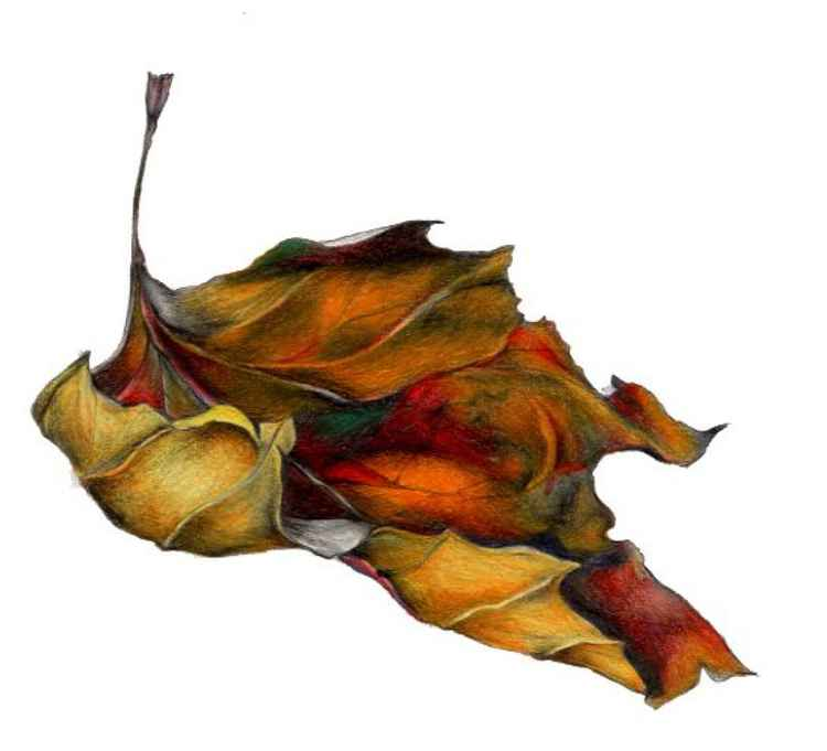 """Every leaf speaks bliss to me, fluttering from the autumn tree."" Emily Bronte"