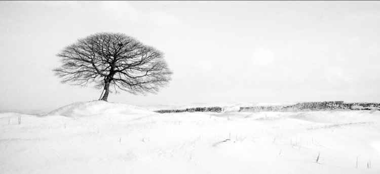 A winters tree - Peak District National Park -