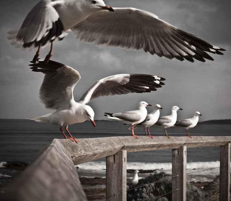 Seagull#1 -