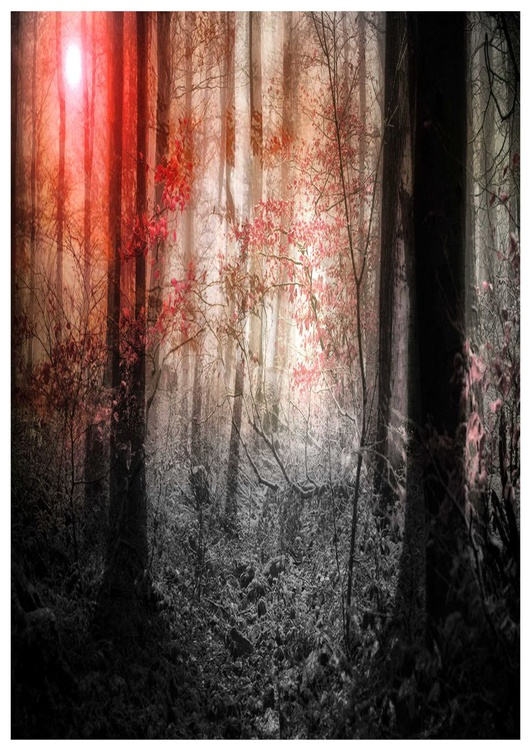 Red Forest III - Image 0