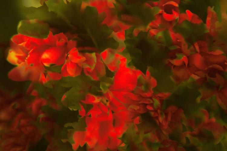 Garden 1 (from the Garden Series) - Image 0
