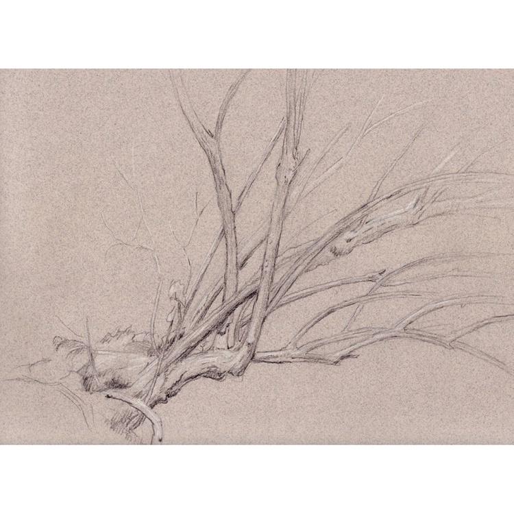 Riverbank Tree - Image 0
