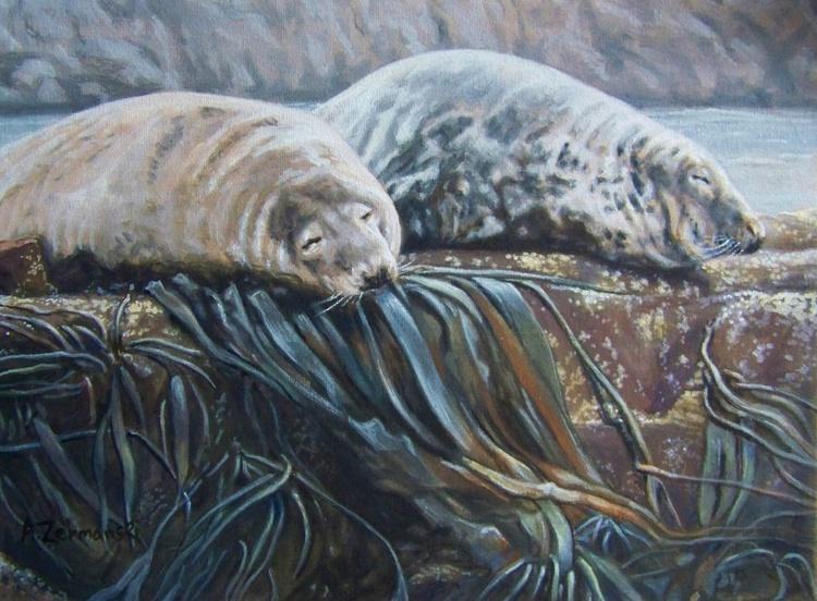 Farne Island Grey Seals - Image 0