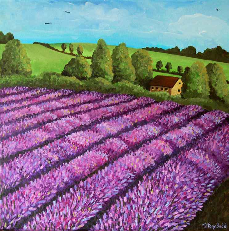 The Lavender Field -