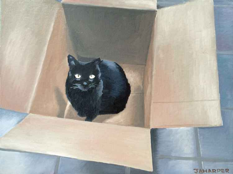 Cat In A Box -