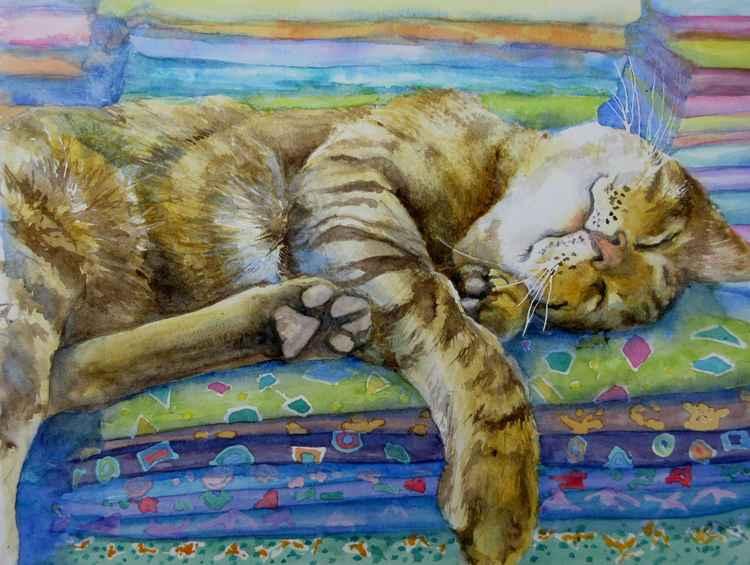 Cat Nap -