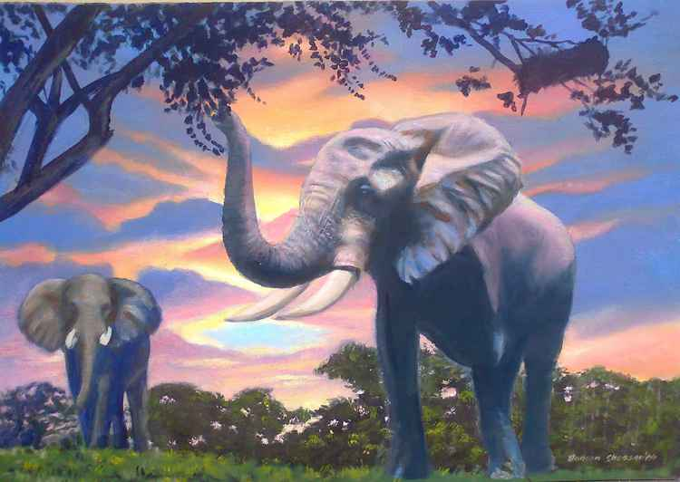 Elephant in the bush at sunrise -