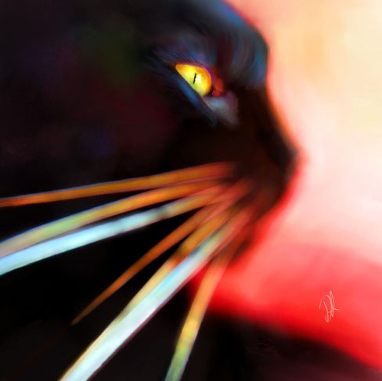 Whisker Face - Image 0