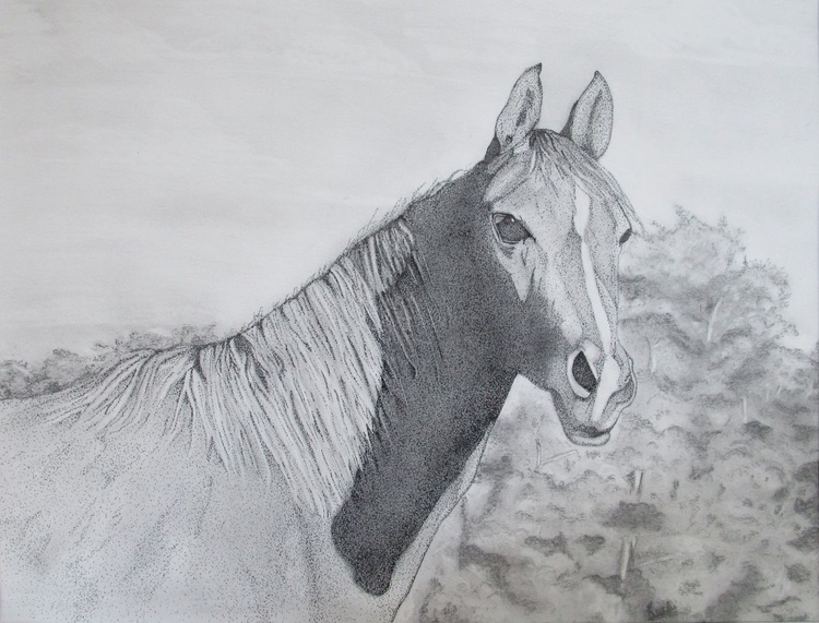 Horse Astray - Pen and Graphite on Art Paper - Image 0