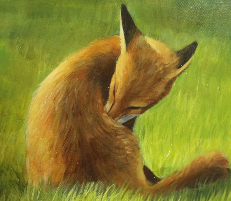 Foxes in the Sun Vol 2 - Image 0