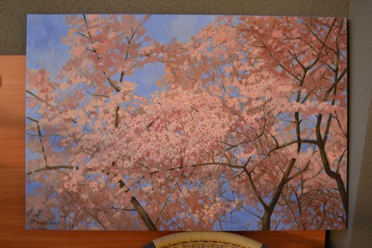cherries blooming - Image 0