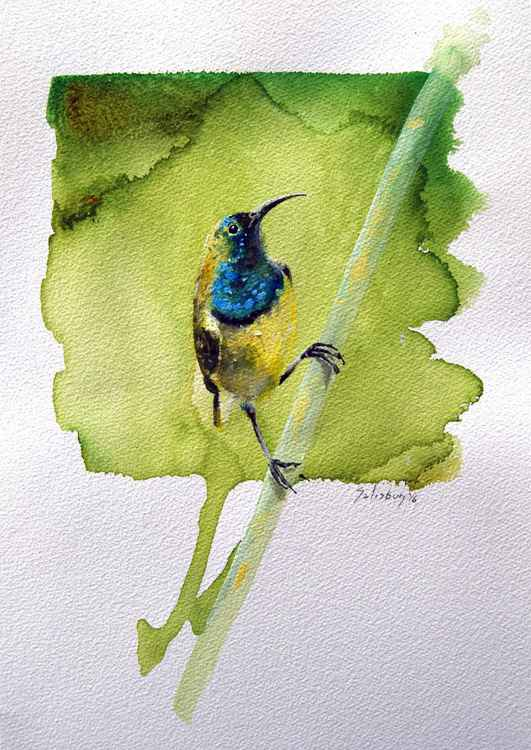 Yellow breasted sunbird -