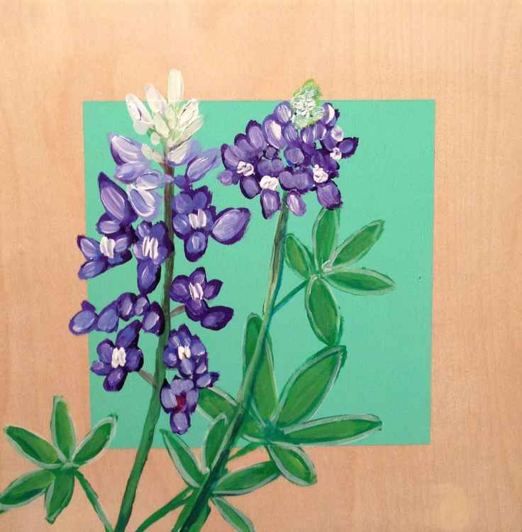 No. 13 | Bluebonnets
