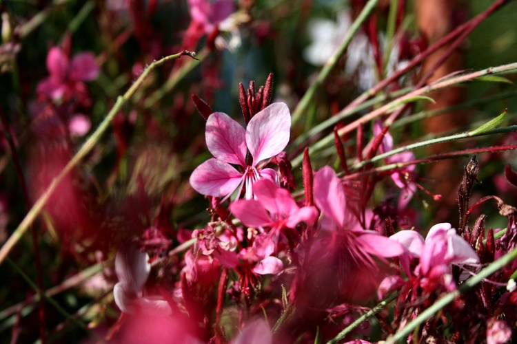 just pink wind - Image 0