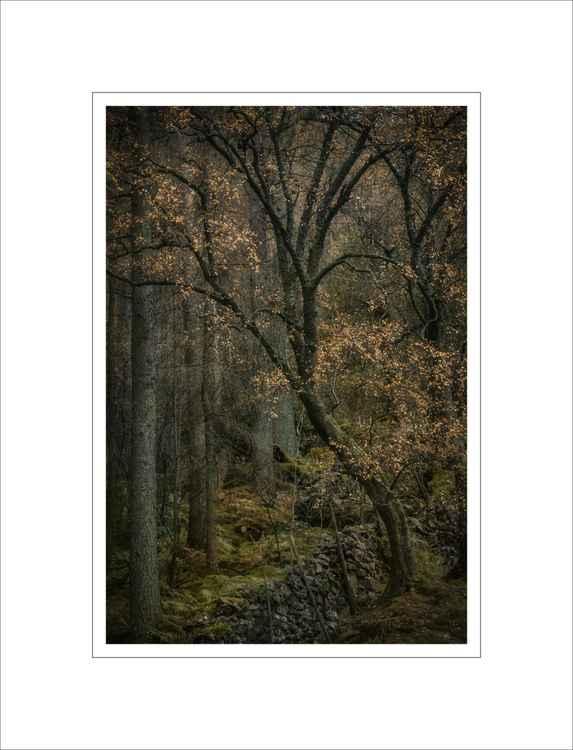 Woodland Shimmer -