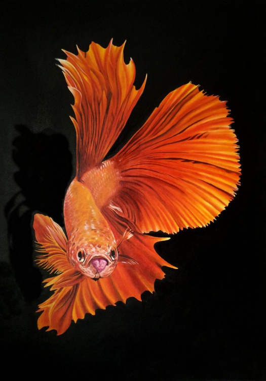 Betta Fish - 2 - Image 0