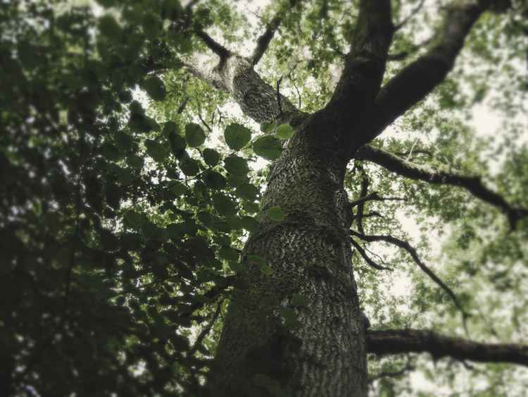 Treeview #12 -