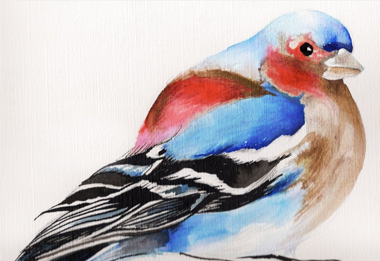 A Colourful Chaffinch - Image 0