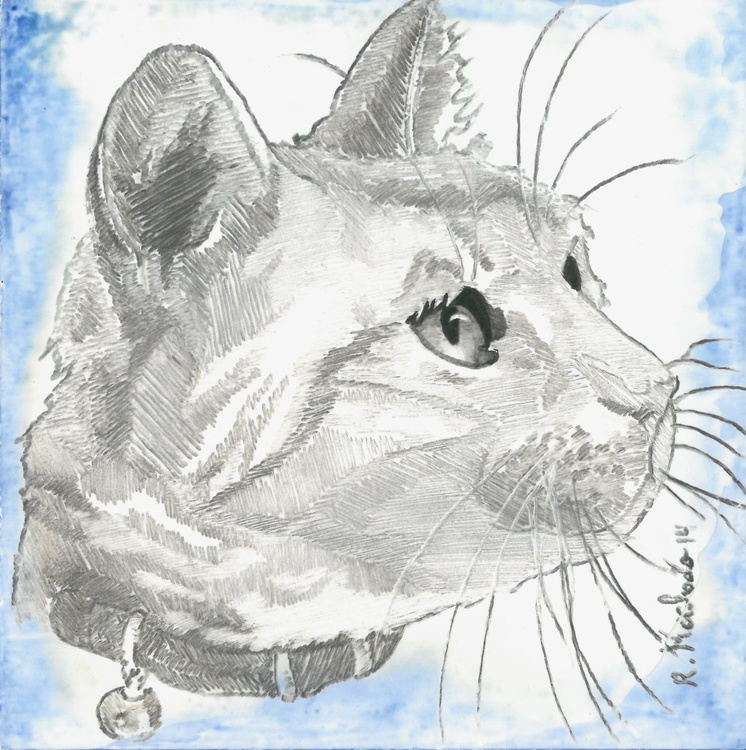 Cat Head I - Image 0