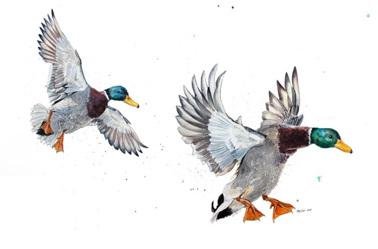 """""""Mighty Ducks"""" Original Watercolour and Inks - Image 0"""