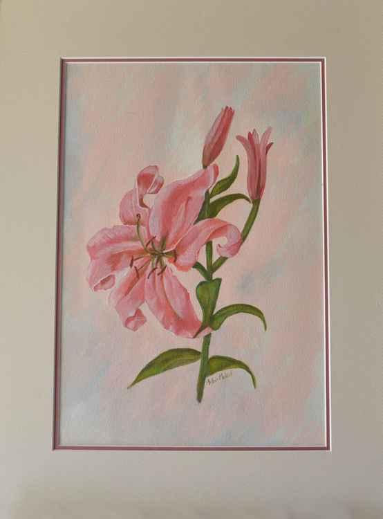 Pink Lillium -