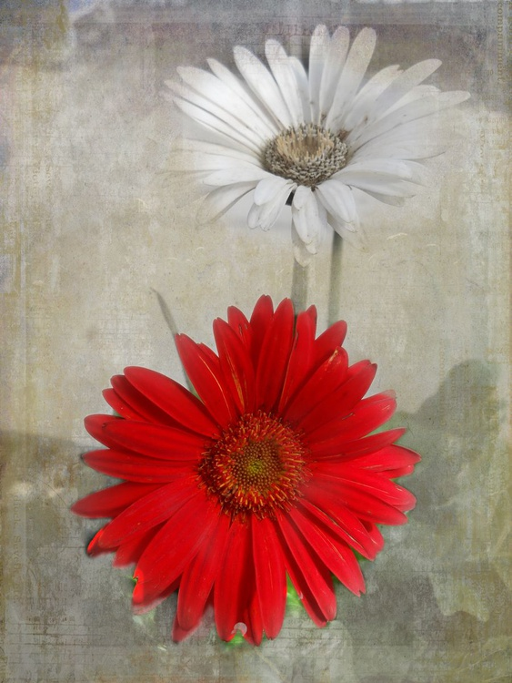 Red and White - Image 0