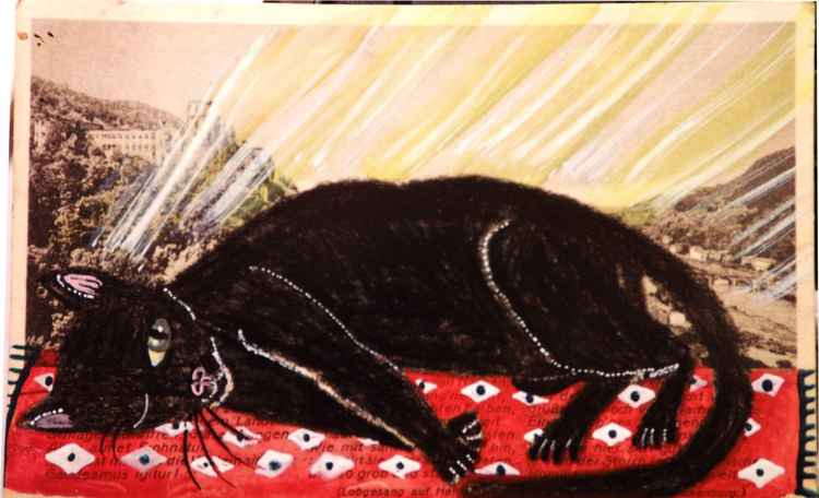 The Cat Who Slept on a Red Rug in the Sun- Cats of May Series