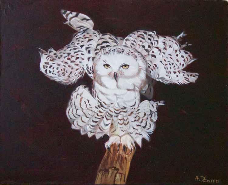 Snow Owl -