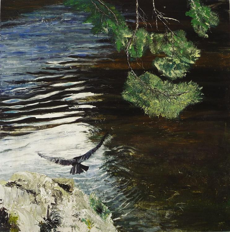 Hawk, River Tweed - Image 0