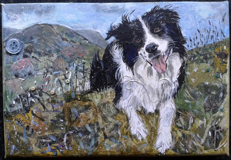 Collie dog in the hills - Image 0