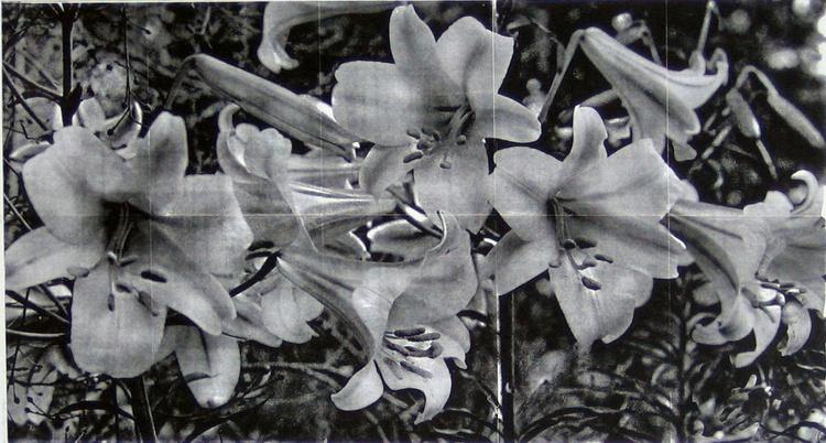 ' Lillies ' - Image 0