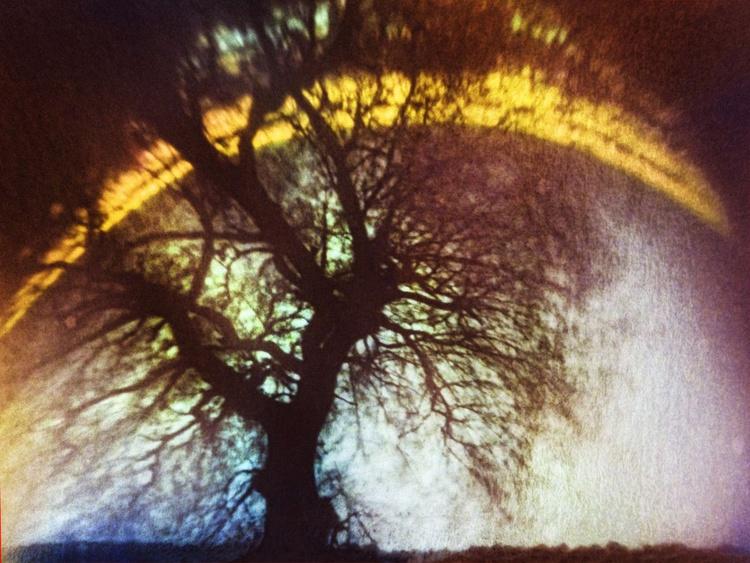 Time Tree (pinhole solar photograph) - Image 0
