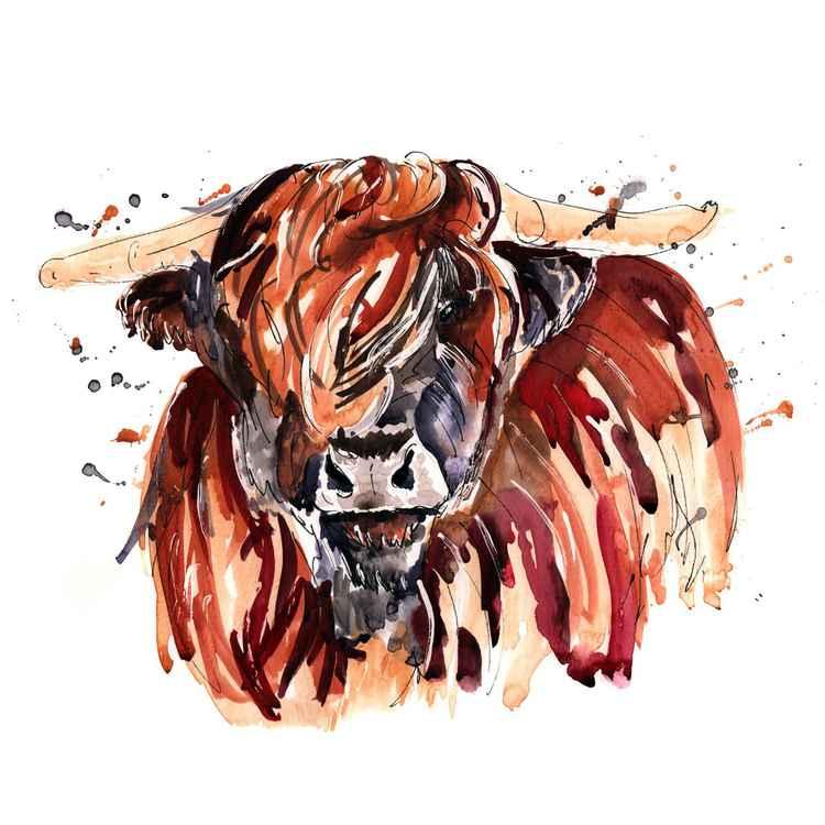 HIGHLAND COW - ANGUS