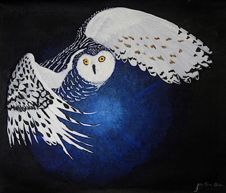 Owl vision - Image 0
