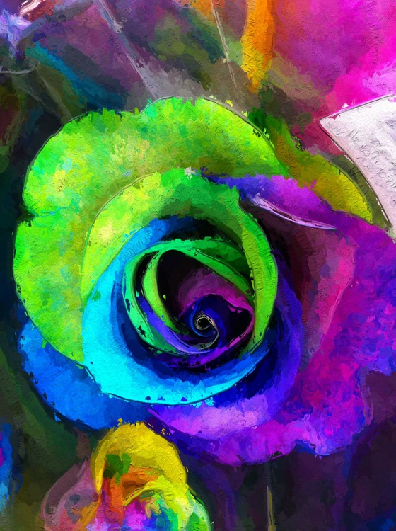 Colourific Rose 2 - Image 0