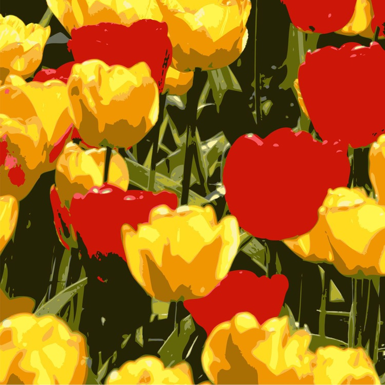 Red and yellow Tulips - Image 0